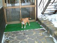 温泉犬ラン